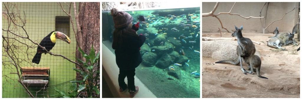 Zoo de Bâle 1