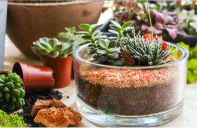 tinygarden.ch-terrarium-suisse-plantes-locales