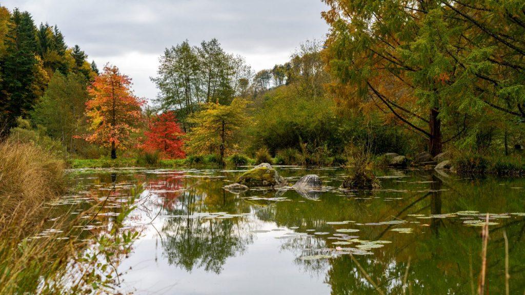 arboretum-automne-aubonne-ballade-en-famille